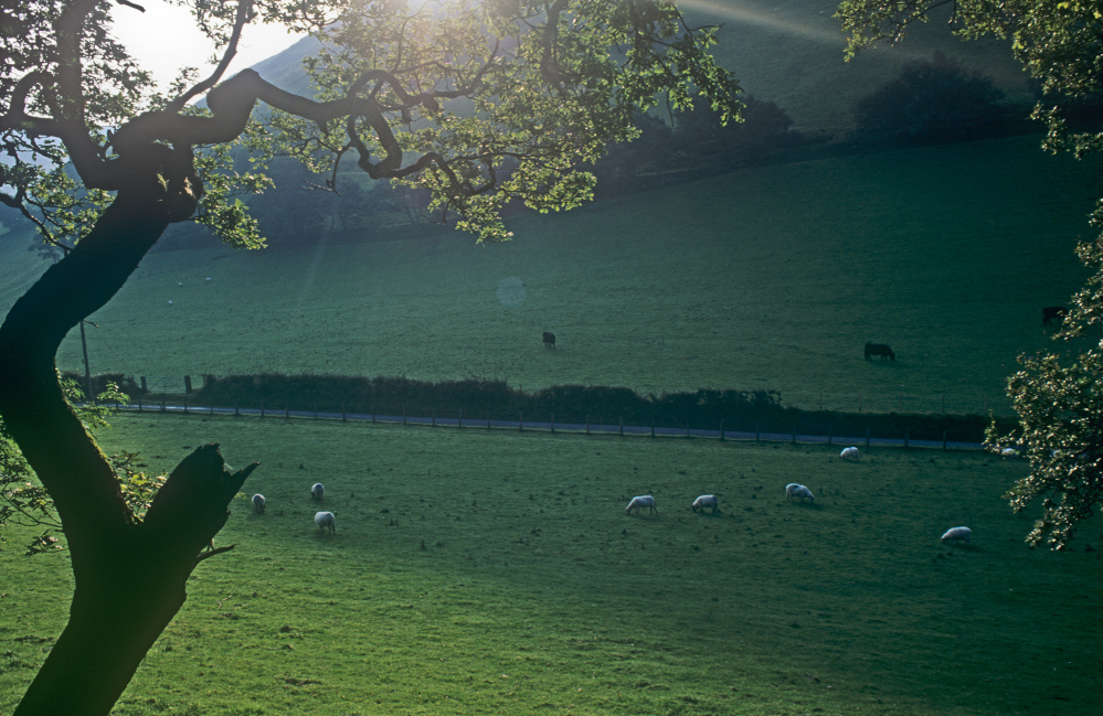 Sheep field near Castell y Bere, mid Wales