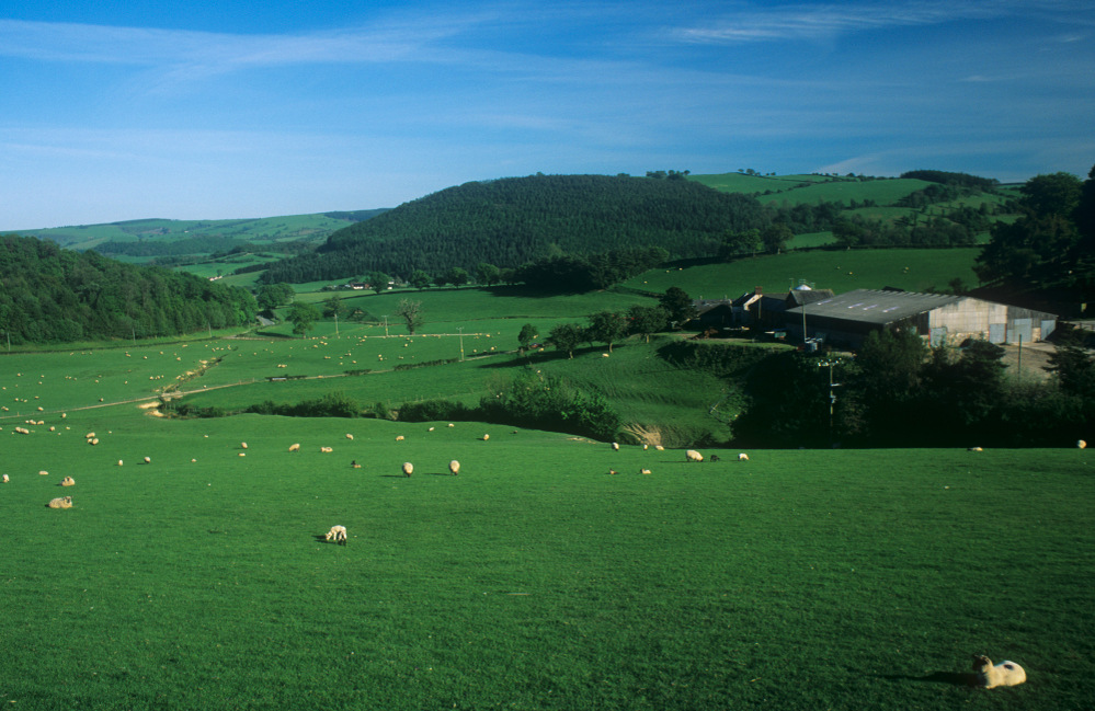 Sheep field near Kerry, mid Wales
