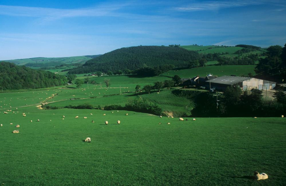 Sheep field near Kerry, mid Wales