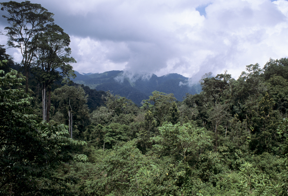 Lowland rainforest. Near Berastagi Sumatra