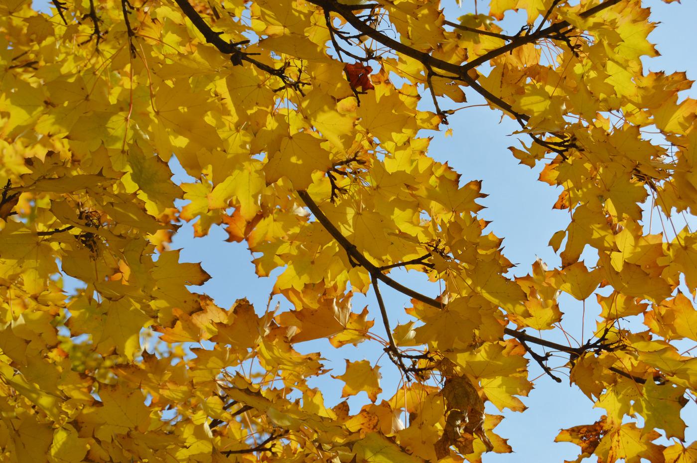 Autumn leaves Budapest Park