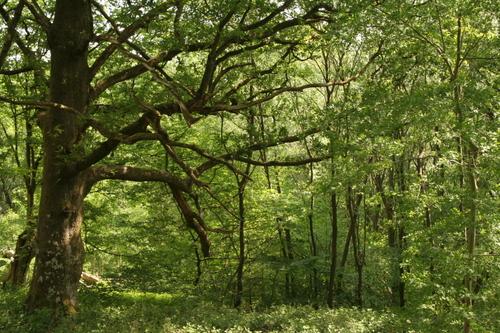 Woods near Llanidloes
