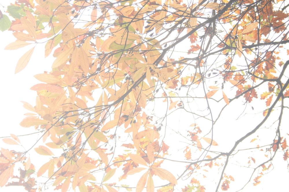 Leaves, Devils Bridge Wales