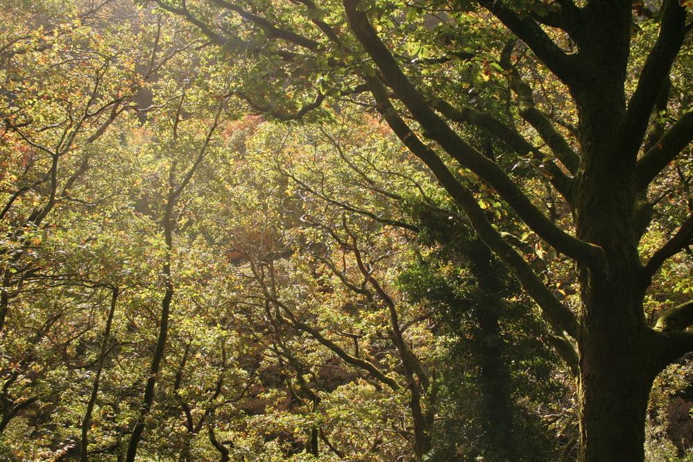 Trees, Devils Bridge Wales