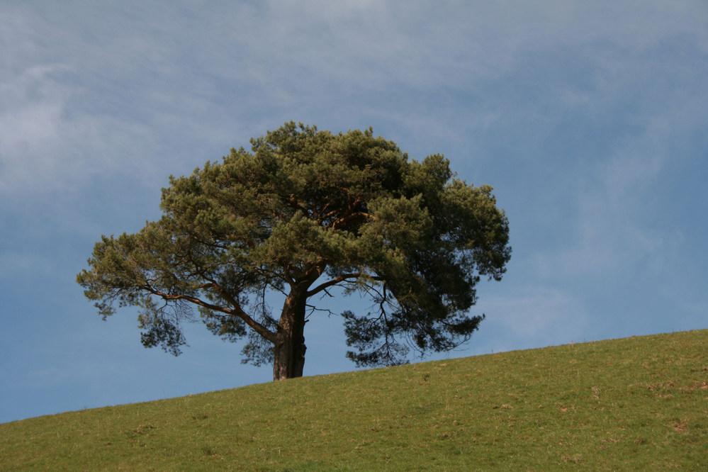 Tree near Llanidloes Wales.