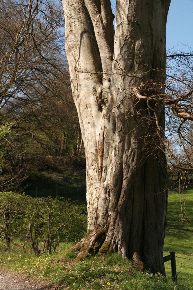 Tree trunk. Near Llanidloes Wales.