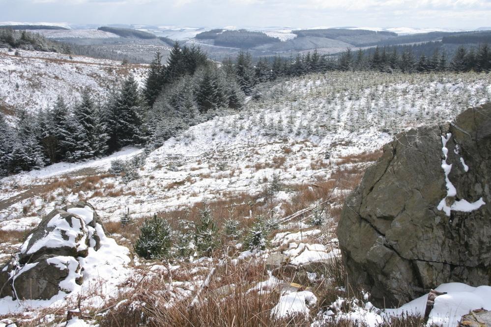 Upper Severn Valley, Hafren Forest